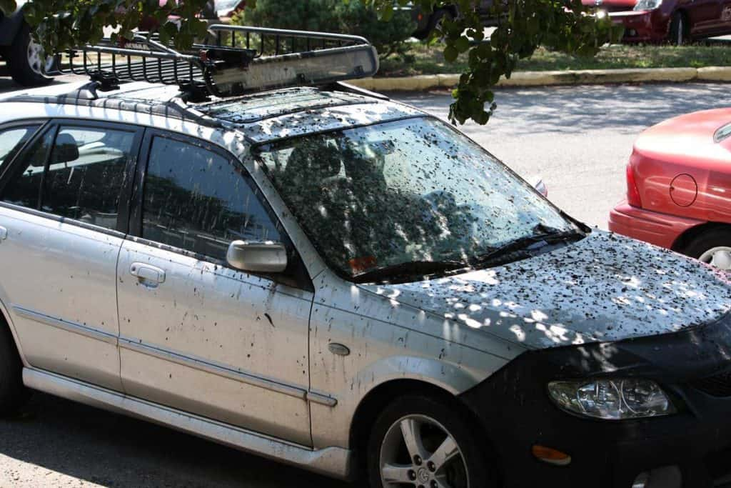Unfortunate car with lots of bird poop