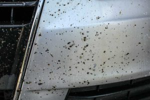 How to Get Bugs off of Your Vehicle