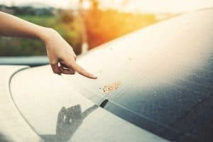 How to Get Bird Poop off Your Car