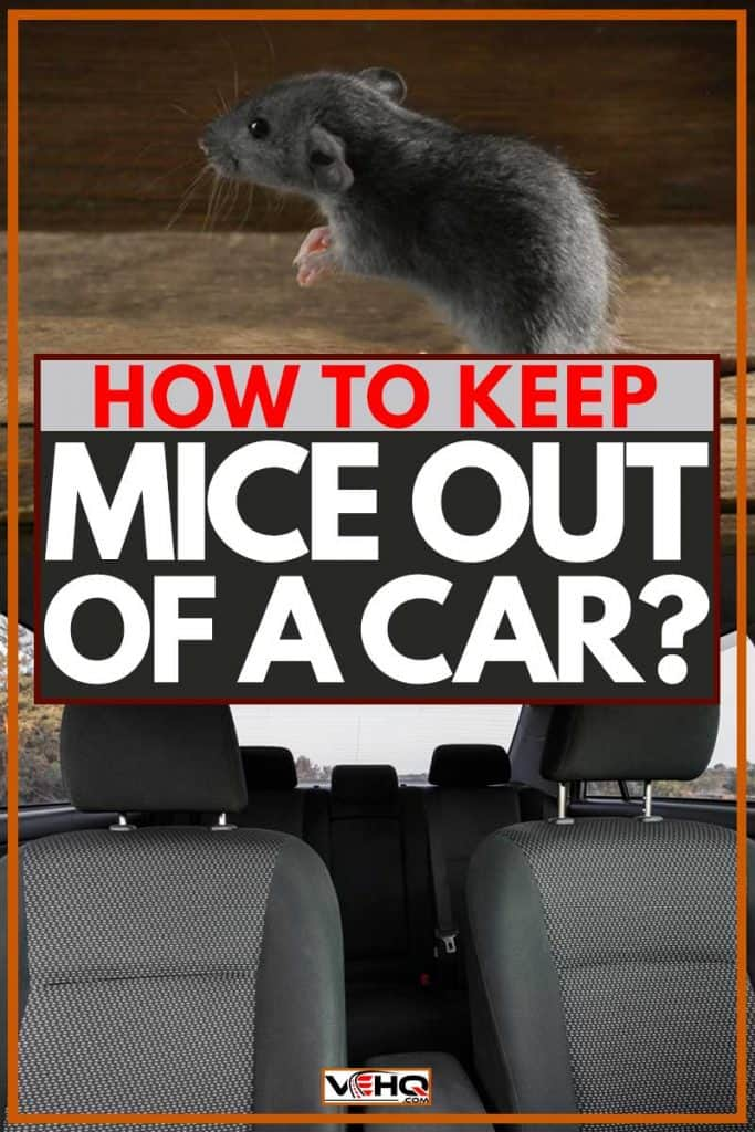 How to Keep Mice Out of a Car?