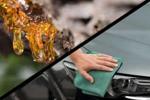 Read more about the article How To Remove Tree Sap From Your Car (Without Ruining The Paint)