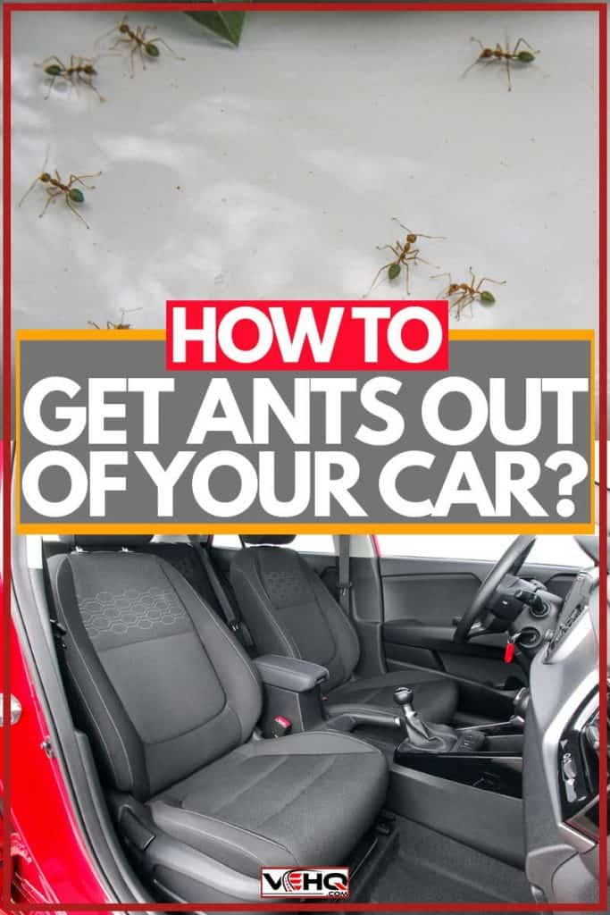 Car interior with ants inside