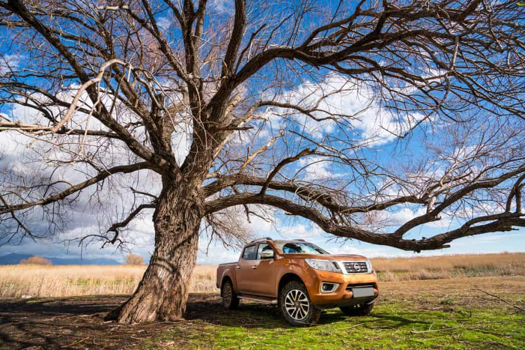 Nissan Frontier Pickup Truck parked at lawn under a big tree, Is the Nissan Frontier a Full-size 1/2 Ton Truck?