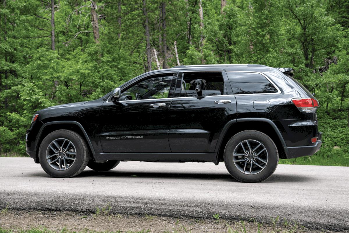 Adorable Black Labrador Retriever dog pokes his head out the window of a Jeep Grand Cherokee SUV car