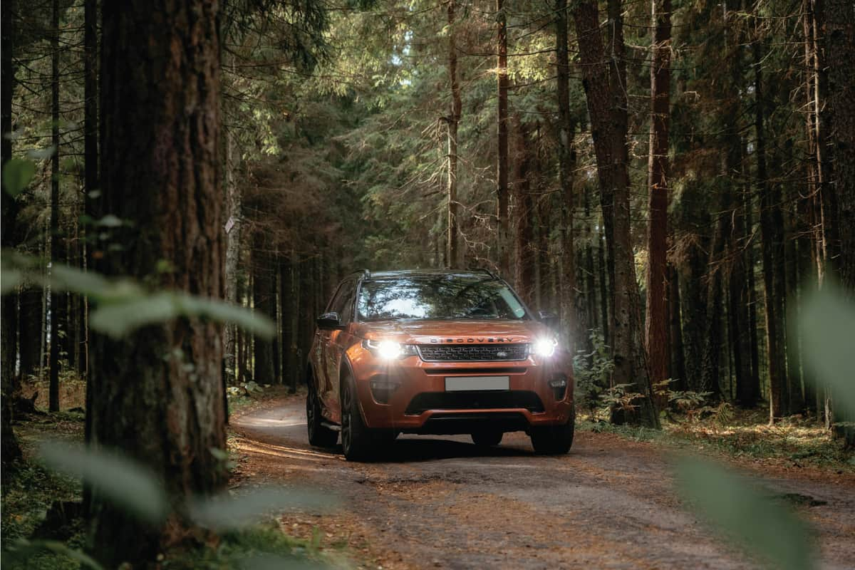 Land Rover Discovery Sport on country road in autumn forest landscape.