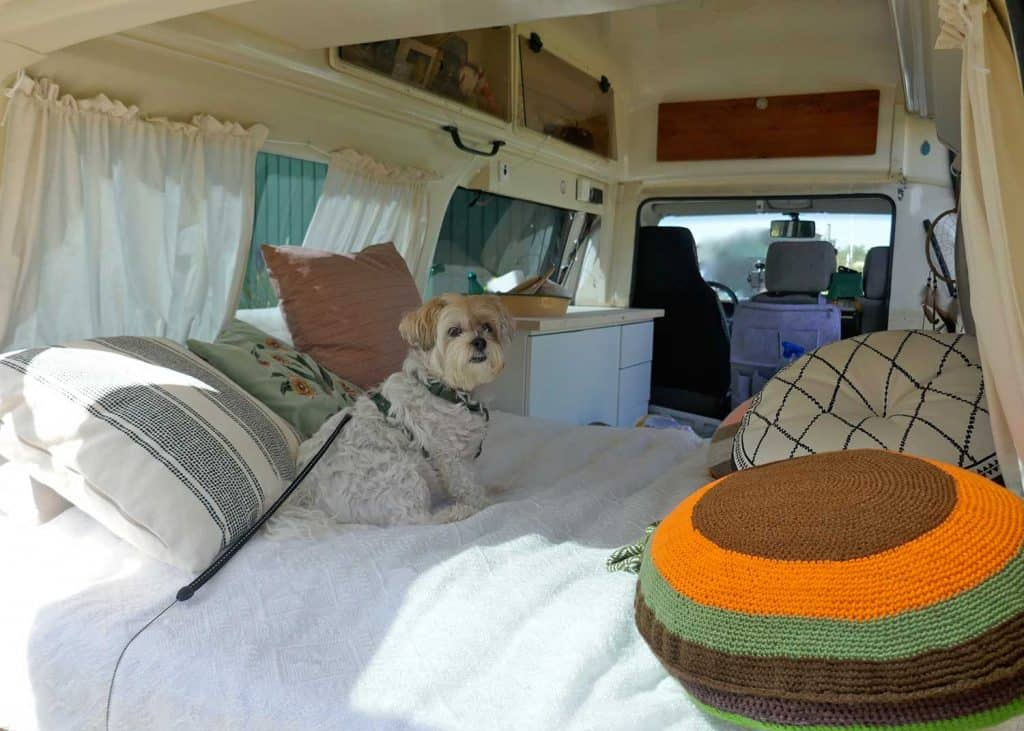 Motorhome with pet dog on the bed