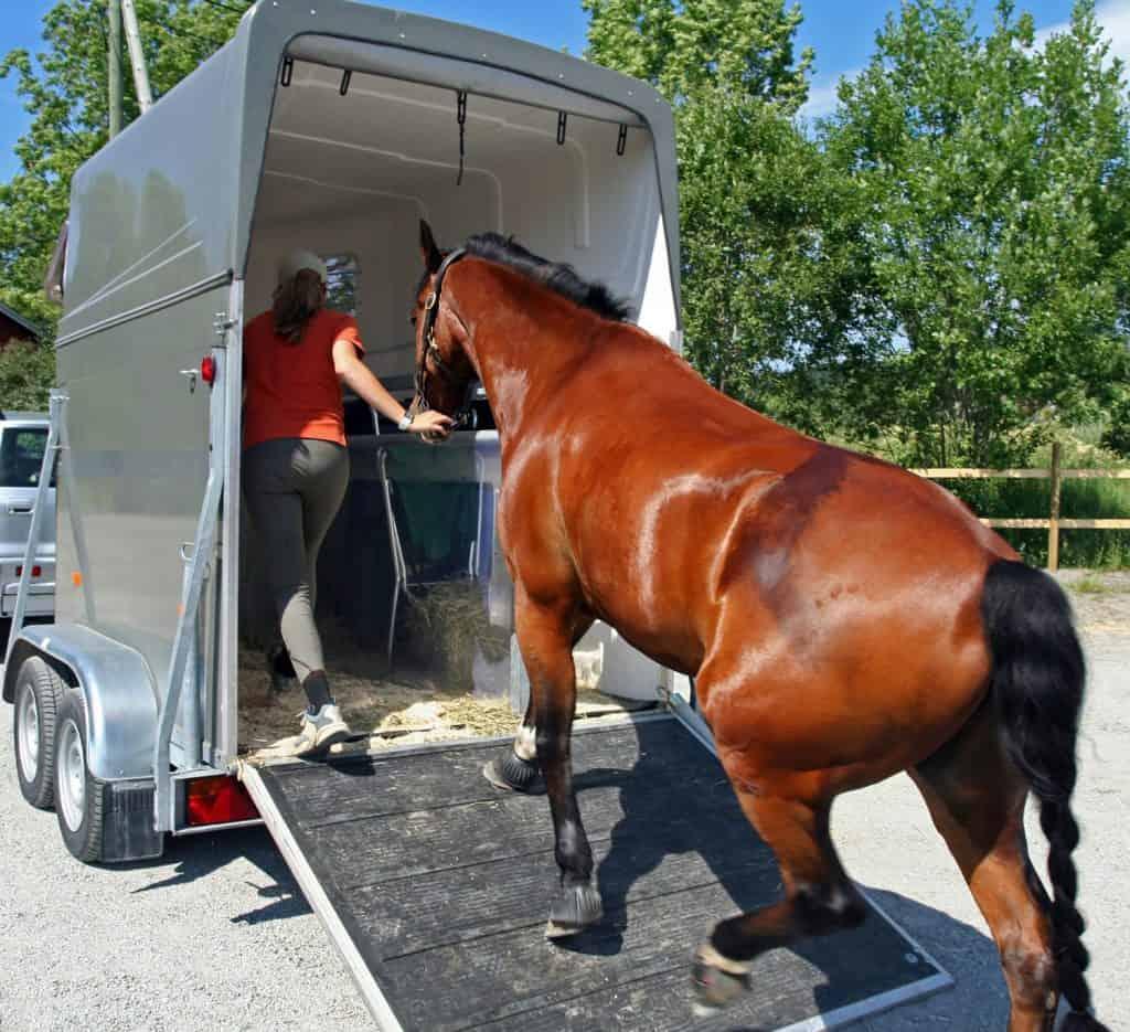 a horse getting in a horse trailer